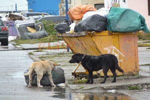 Desde el Municipio advierten que hay hasta 15 perros sueltos por cuadra