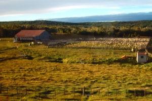 ¿Trata de personas en los campos de Tierra del Fuego?